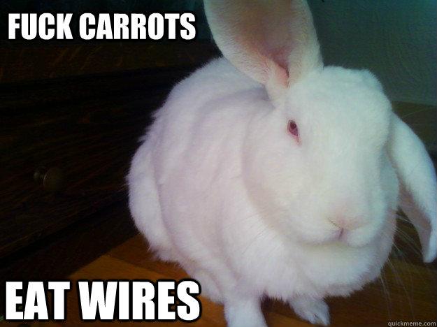 Kaninchen ficken — bild 9