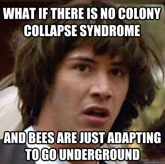 what if there is no colony collapse syndrome  and bees are just adapting to go underground  - what if there is no colony collapse syndrome  and bees are just adapting to go underground   conspiracy keanu