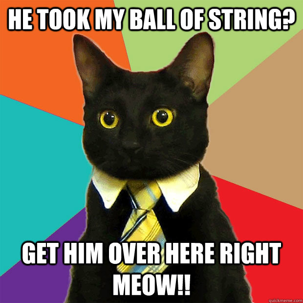 he took my ball of string? get him over here right meow!! - he took my ball of string? get him over here right meow!!  Business Cat