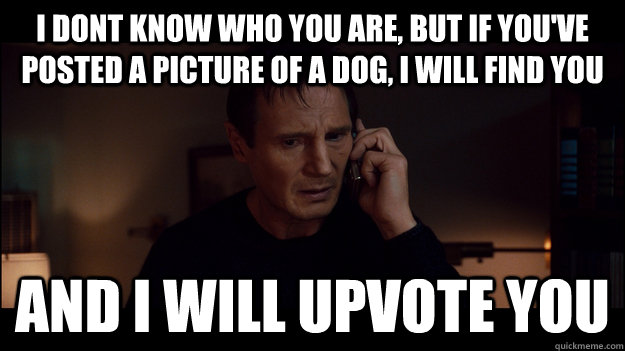 I Dont know who you are, but if you've posted a picture of a dog, i will find you and i will upvote you - I Dont know who you are, but if you've posted a picture of a dog, i will find you and i will upvote you  Misc