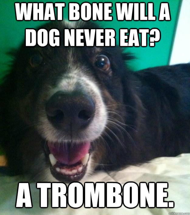 What bone will a dog never eat? A trombone. - What bone will a dog never eat? A trombone.  Bad joke bud