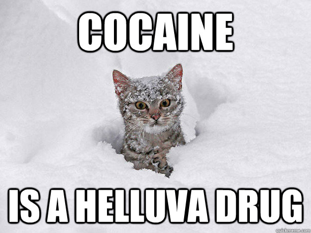 COCAINE IS A HELLUVA DRUG - COCAINE IS A HELLUVA DRUG  Cocaine Cat