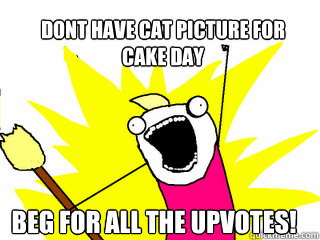 Dont have cat picture for cake day beg for all the upvotes! - Dont have cat picture for cake day beg for all the upvotes!  All The Things