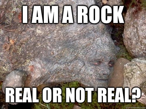 I am a rock Real or not real?