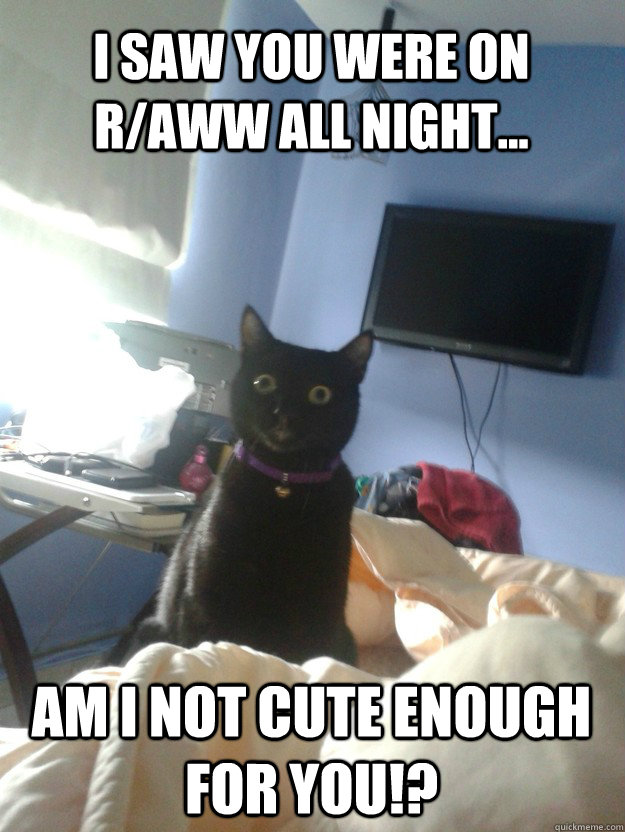 i saw you were on r/aww all night... am i not cute enough for you!? - i saw you were on r/aww all night... am i not cute enough for you!?  overly attached cat