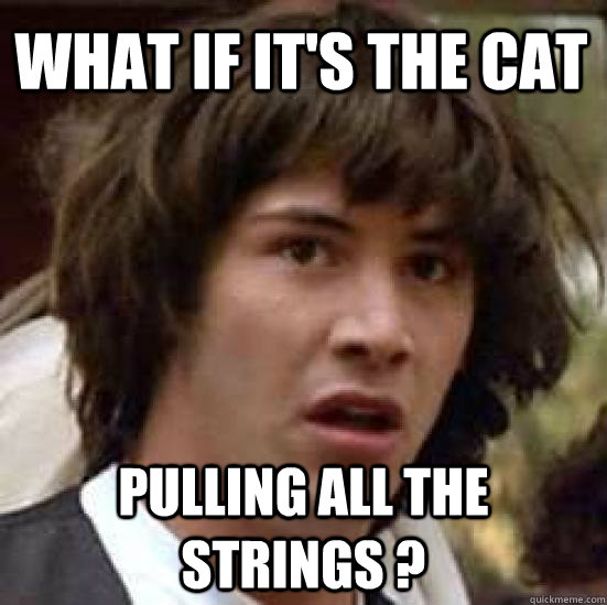 What if it's the cat  pulling all the strings ? - What if it's the cat  pulling all the strings ?  conspiracy keanu