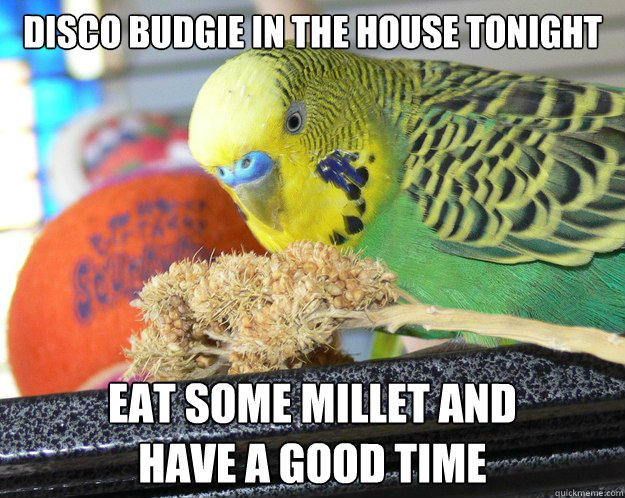 disco budgie in the house tonight eat some millet and  have a good time - disco budgie in the house tonight eat some millet and  have a good time  Misc