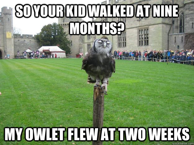 so your kid walked at nine months? my owlet flew at two weeks - so your kid walked at nine months? my owlet flew at two weeks  Misc