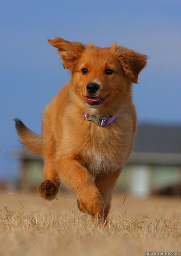 -    Ridiculously Photogenic Puppy