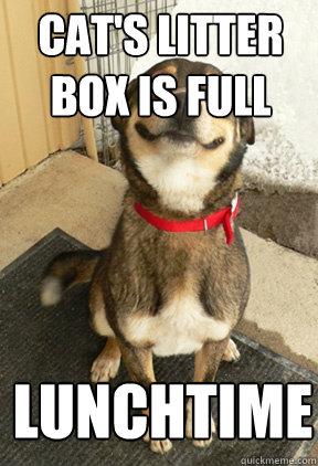 cat's litter box is full lunchtime - cat's litter box is full lunchtime  Good Dog Greg