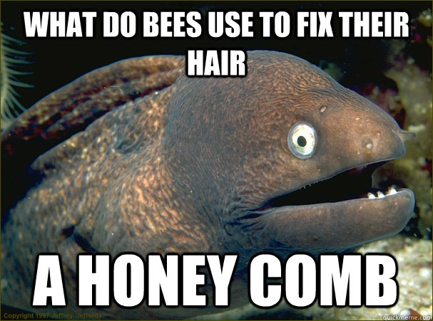 What do bees use to fix their hair  A Honey comb - What do bees use to fix their hair  A Honey comb  Bad Joke Eel