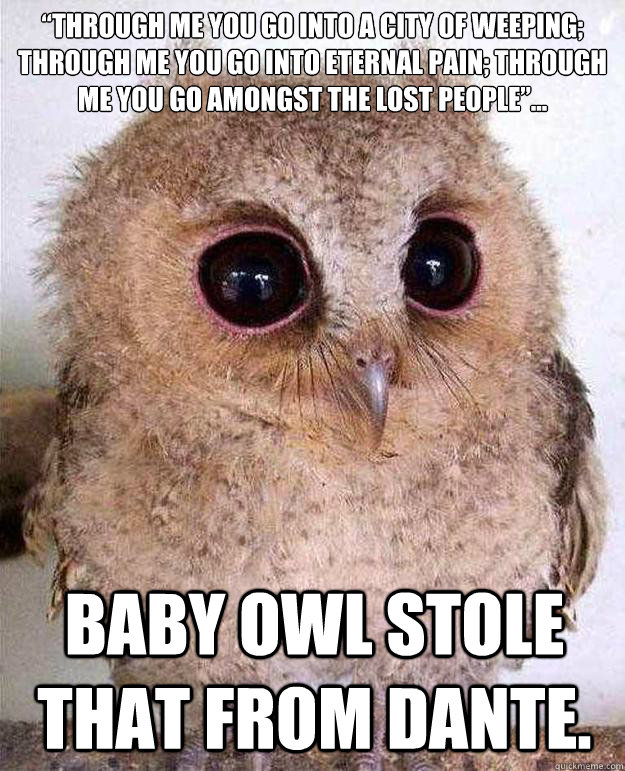 """""""Through me you go into a city of weeping; through me you go into eternal pain; through me you go amongst the lost people""""... Baby Owl stole that from Dante. - """"Through me you go into a city of weeping; through me you go into eternal pain; through me you go amongst the lost people""""... Baby Owl stole that from Dante.  Baby Owl Dante"""