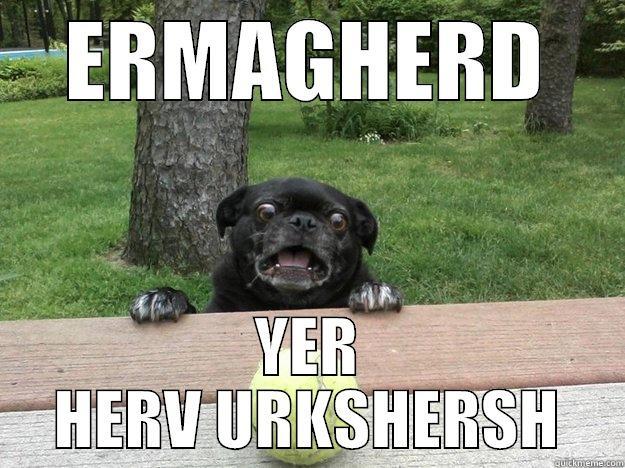 ERMAGHERD YER HERV URKSHERSH Berks Dog