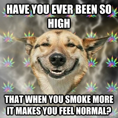 Have you ever been so high that when you smoke more it makes you feel normal? - Have you ever been so high that when you smoke more it makes you feel normal?  Stoner Dog