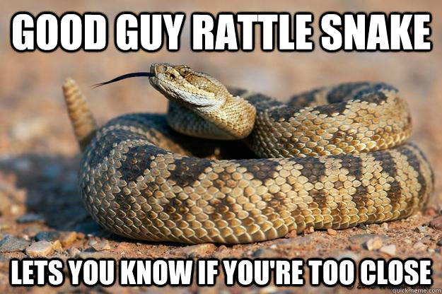 Good guy rattle snake  lets you know if you're too close - Good guy rattle snake  lets you know if you're too close  Misc