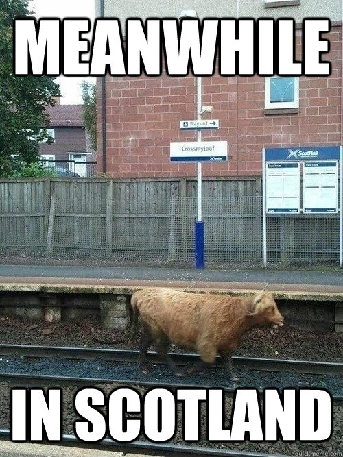 cabde5b0402878c1214d11c2015659c08ea327b08f5b145709675deef594f8ed meanwhile in scotland scotrail quickmeme