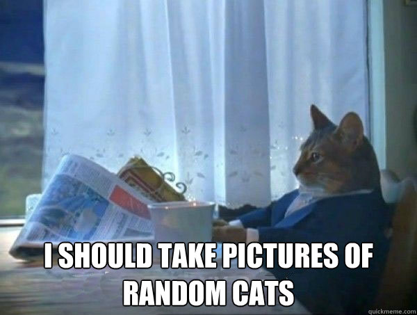 I should take pictures of random cats -  I should take pictures of random cats  morning realization newspaper cat meme