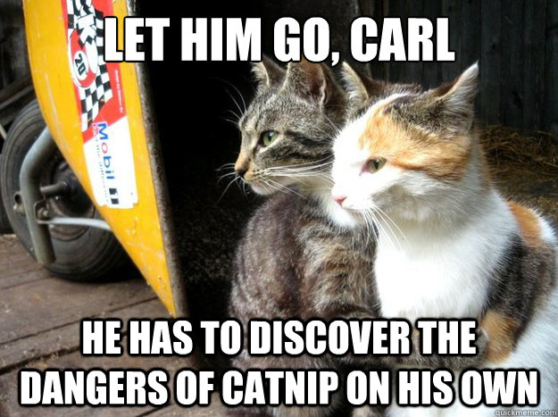 Let him go, Carl He has to discover the dangers of catnip on his own - Let him go, Carl He has to discover the dangers of catnip on his own  Restraining Cat