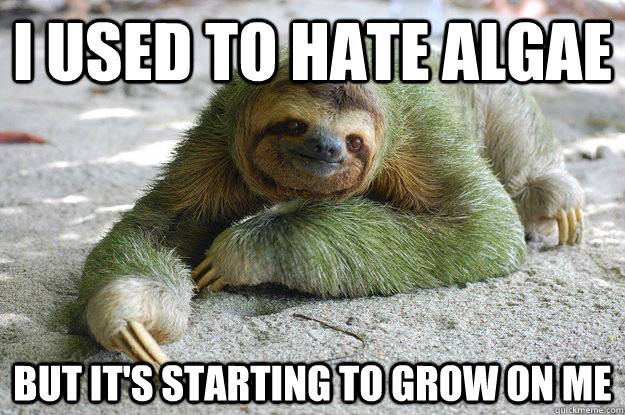 I used to hate algae but it's starting to grow on me  Sloth Pun Sloth