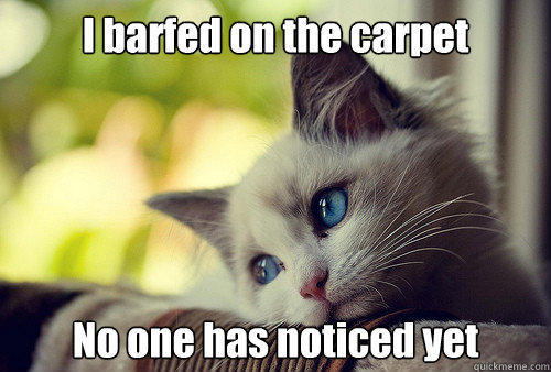 I barfed on the carpet No one has noticed yet - I barfed on the carpet No one has noticed yet  First World Problems Cat
