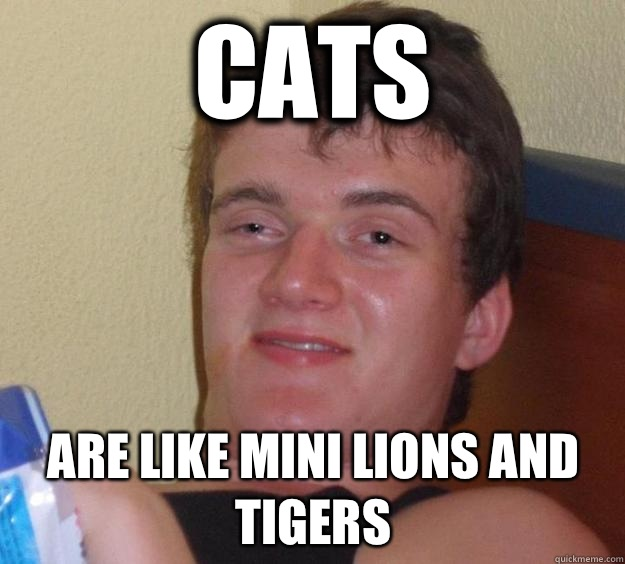 Cats Are like mini lions and tigers - Cats Are like mini lions and tigers  10 Guy