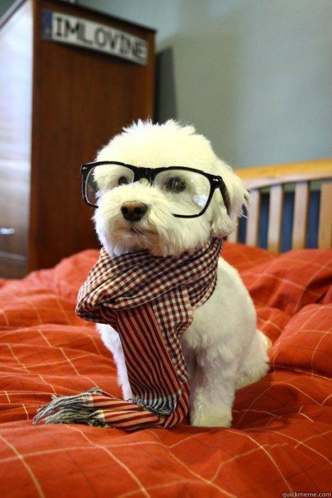-    Hipster Dog