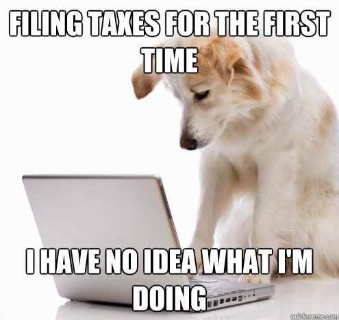 filing taxes for the first time i have no idea what i'm doing - filing taxes for the first time i have no idea what i'm doing  no idea dog