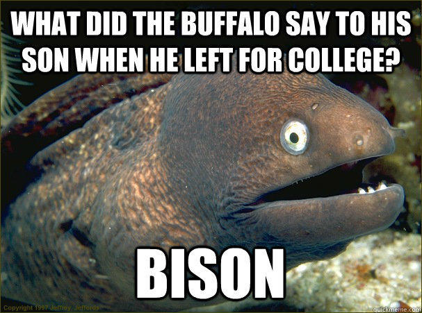 What did the buffalo say to his son when he left for college? Bison  Bad Joke Eel