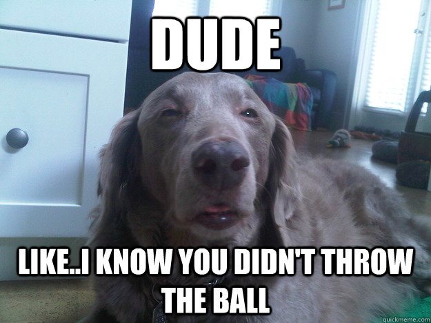 dude like..i know you didn't throw the ball - dude like..i know you didn't throw the ball  10 Dog