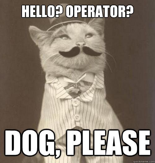 Hello Operator Dog Please Original Business Cat Quickmeme