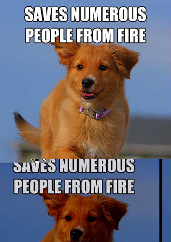 SAVES NUMEROUS PEOPLE FROM FIRE USING ONE PAW - SAVES NUMEROUS PEOPLE FROM FIRE USING ONE PAW  Ridiculously Photogenic Puppy