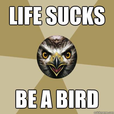 life sucks be a bird  Bird Boy