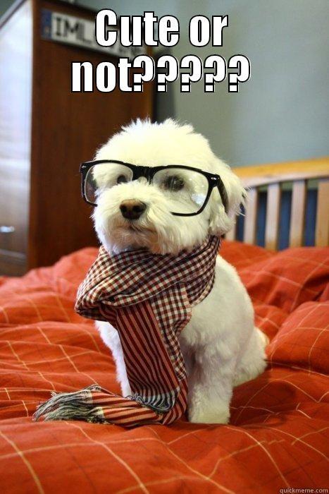 Eu mereço uma curtida?? - CUTE OR NOT?????  Hipster Dog