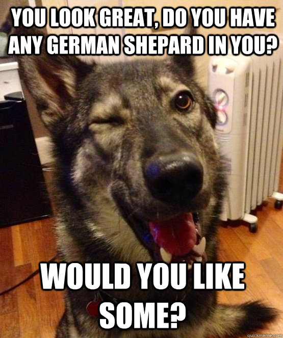 You look great, do you have any German Shepard in you? Would you like some?