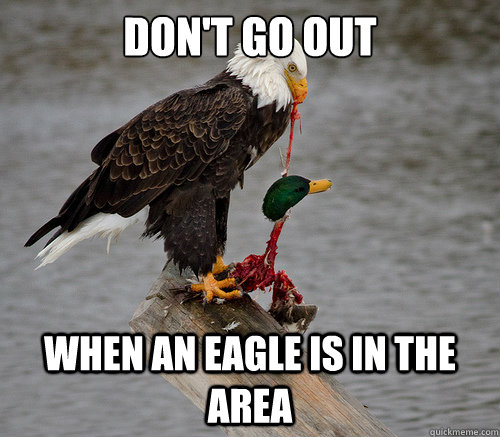 Don't go out When an eagle is in the area - Don't go out When an eagle is in the area  actual actual advice mallard