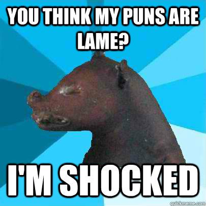 meme Pun raccoon