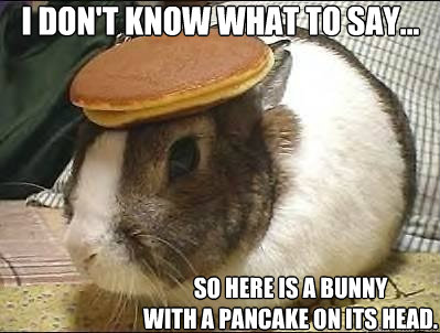 I don't know what to say... So here is a bunny  with a pancake on its head.