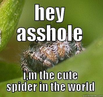 ccfaa39b78fd311f08e1bb4ef605c4fcb2e47ab90cb8df1ebba18df0f617e878 spider is cute quickmeme,Misunderstood Spider Meme