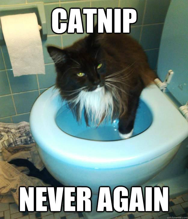 Catnip Never again - Catnip Never again  Misc