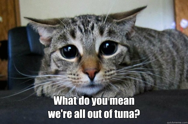 What do you mean  we're all out of tuna? -  What do you mean  we're all out of tuna?  Sad Kitty