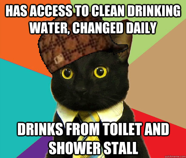 Has access to clean drinking water, changed daily drinks from toilet and shower stall - Has access to clean drinking water, changed daily drinks from toilet and shower stall  Scumbag Cat