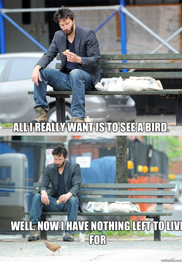 All I really want is to see a bird. Well. Now i have nothing left to live for - All I really want is to see a bird. Well. Now i have nothing left to live for  Sad Keanu