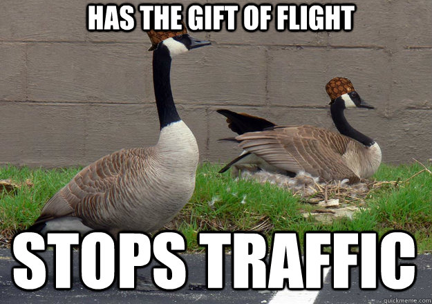 Has the gift of flight Stops traffic - Has the gift of flight Stops traffic  Scumbag Geese