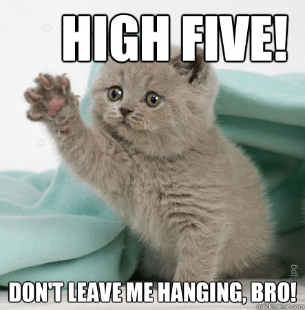 High five! Don't leave me hanging, bro!  High Five Cat