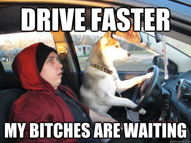 cdd7c8a7c33241849acfea767ccfa73dac91b3144aeef472bb76847afa453d69 casual dog drives car memes quickmeme