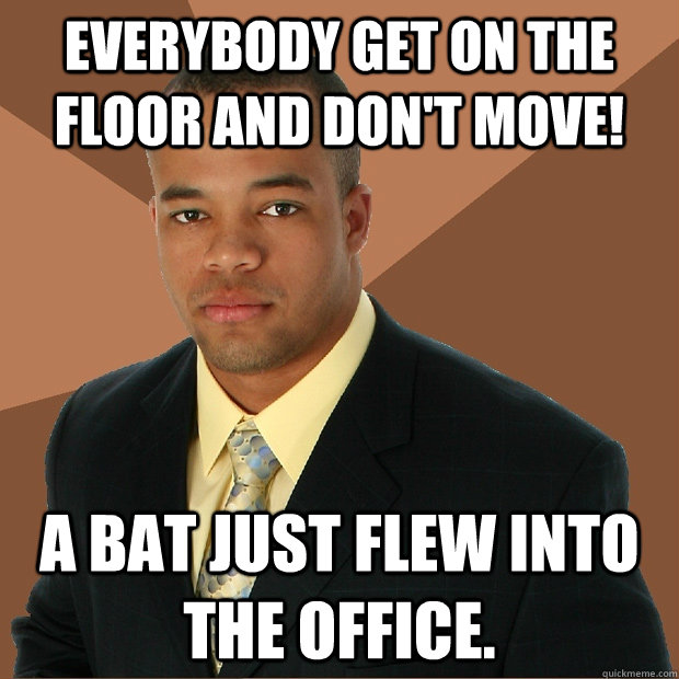 Everybody get on the floor and don't move! A bat just flew into the office. - Everybody get on the floor and don't move! A bat just flew into the office.  Successful Black Man