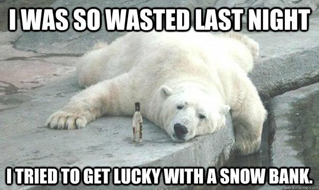Drunk Polar Bear Memes Quickmeme