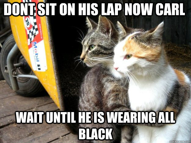Dont sit on his lap now carl wait until he is wearing all black - Dont sit on his lap now carl wait until he is wearing all black  Restraining Cat