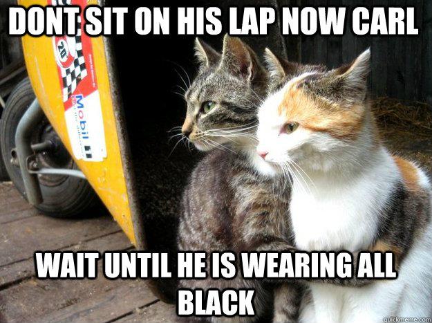 Dont sit on his lap now carl wait until he is wearing all black - Dont sit on his lap now carl wait until he is wearing all black  Restraining Cat