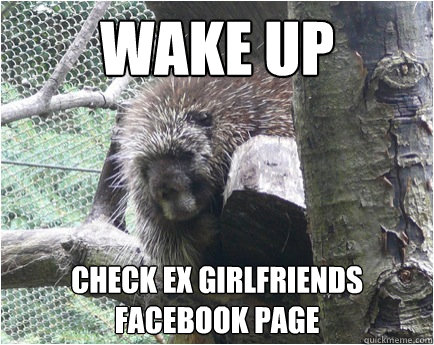 wake up check ex girlfriends facebook page  Post break up porcupine